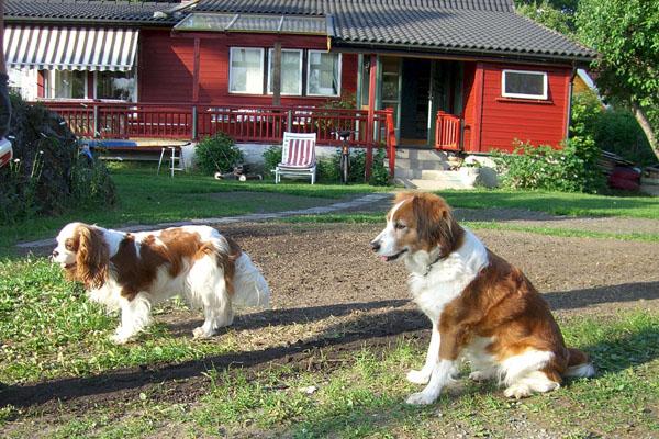 w-cory-candy-ingen-jordhaug-050607-2875
