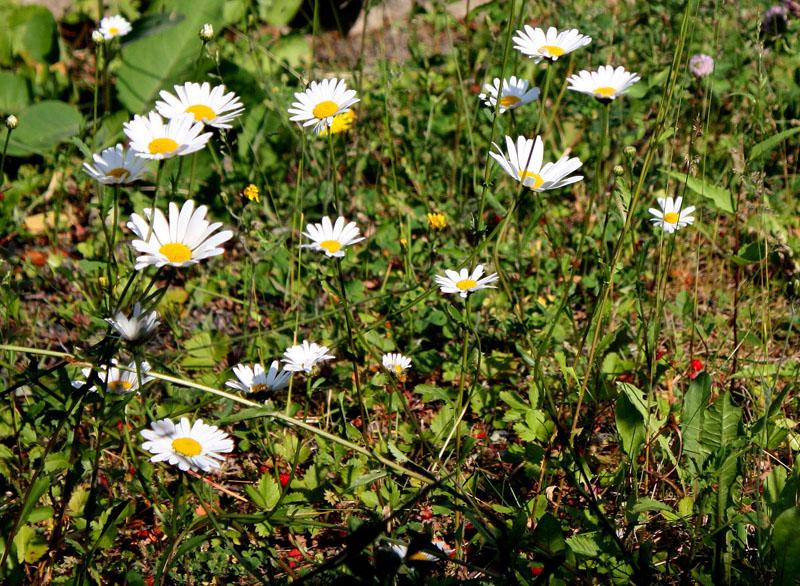w-010709-1646-blomstereng